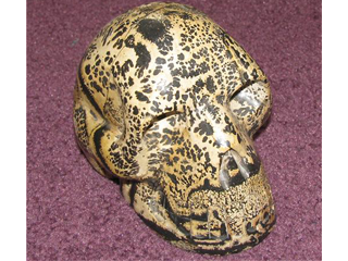 panthera skull